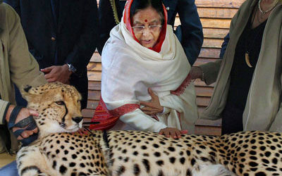 India's Plan to Re-Introduce the Cheetah on Hold