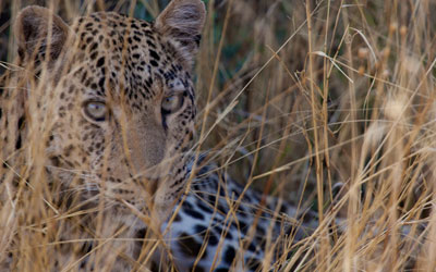 Namibia's Future: AfriCat's Vision
