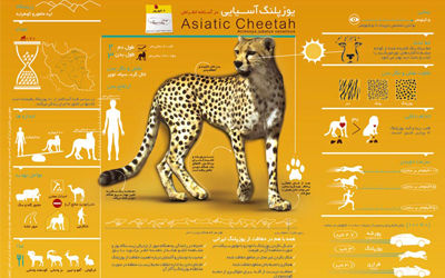 The Asiatic Cheetah: A Call to Reinstate Funding