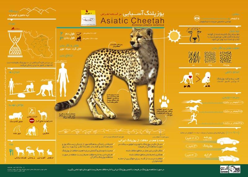CHEETAH WATCH | The Asiatic Cheetah: A Call to Reinstate Funding